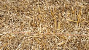 wheatstraw_imagejpeg952